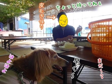 kinako8329.jpg