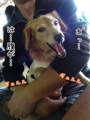 kinako8330.jpg