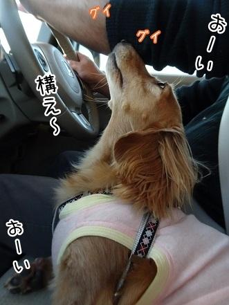 kinako8334.jpg