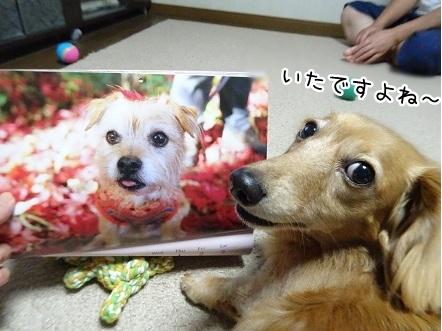 kinako8340.jpg