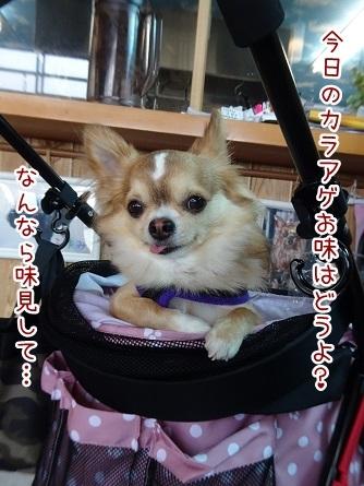 kinako8347.jpg