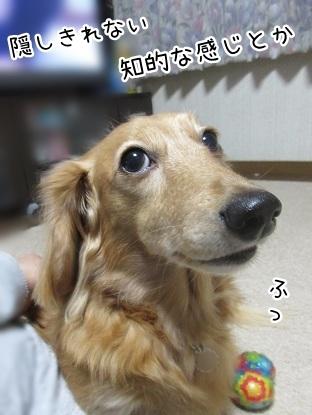 kinako8353.jpg
