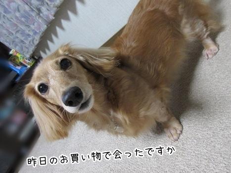 kinako8356.jpg