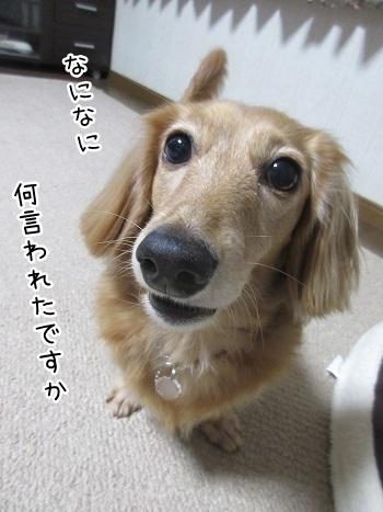 kinako8357.jpg