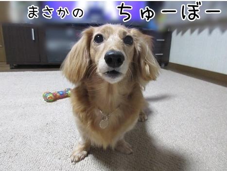 kinako8358.jpg