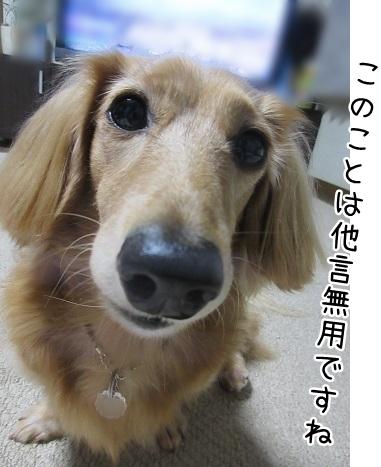 kinako8359.jpg