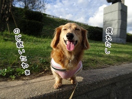 kinako8362.jpg