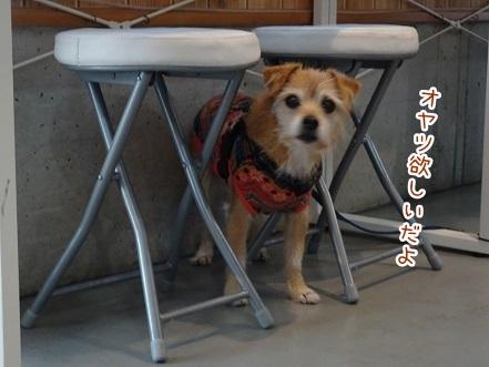 kinako8368.jpg