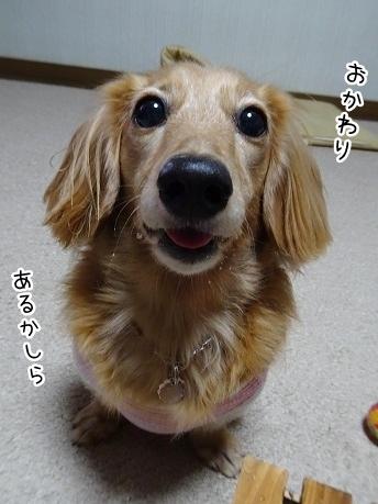 kinako8375.jpg