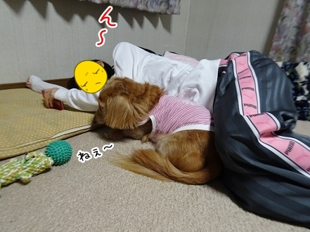 kinako8376.jpg