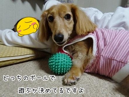 kinako8378.jpg