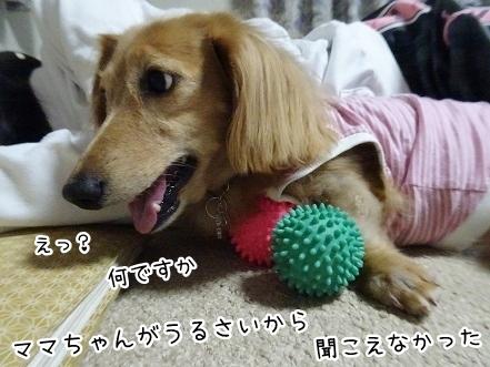 kinako8379.jpg