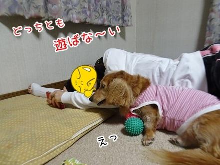 kinako8380.jpg