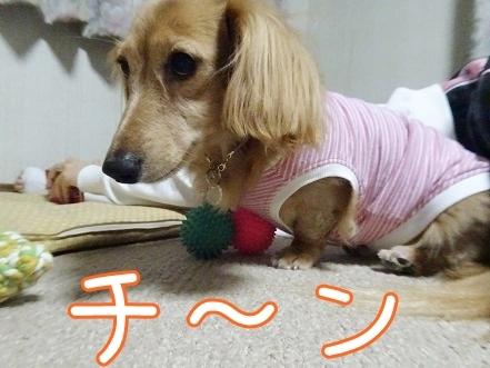 kinako8381.jpg