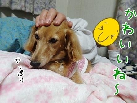 kinako8383.jpg