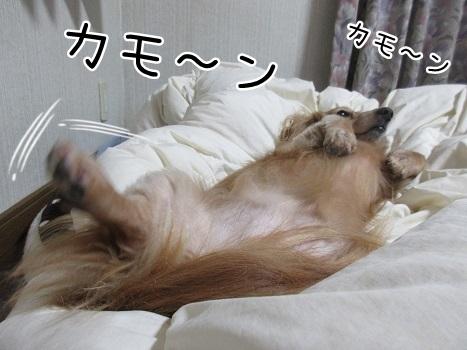 kinako8392.jpg