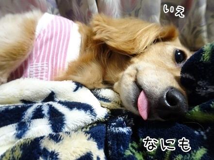 kinako8397.jpg