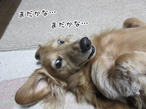 kinako8402.jpg