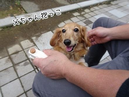 kinako8412.jpg