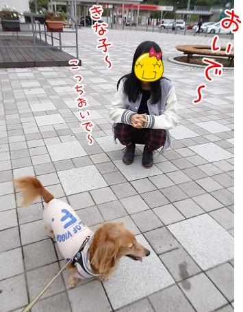 kinako8414.jpg