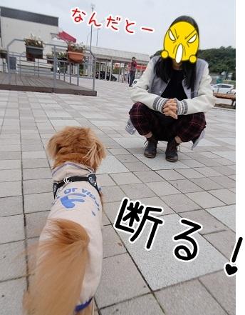 kinako8415.jpg