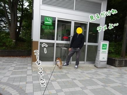 kinako8417.jpg
