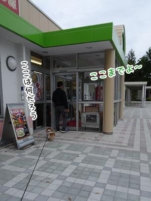 kinako8418.jpg