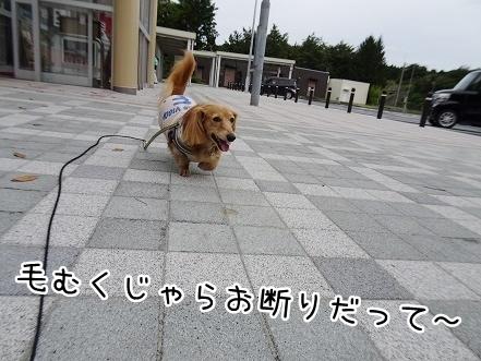 kinako8419.jpg