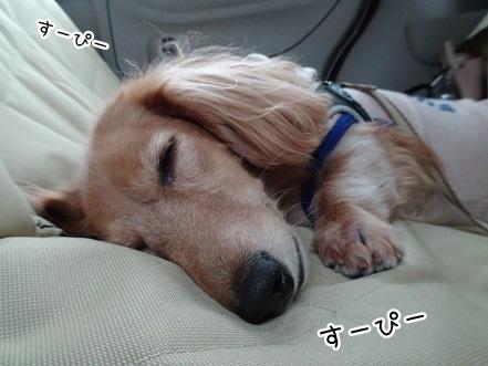 kinako8422.jpg