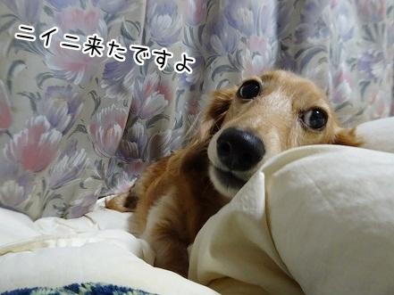 kinako8428.jpg