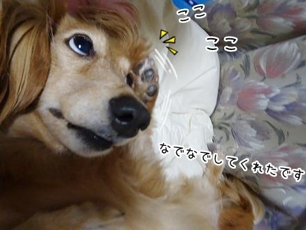 kinako8429.jpg