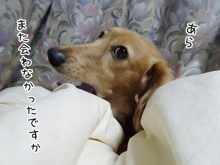 kinako8431.jpg