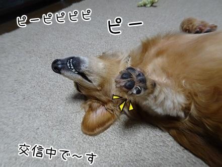 kinako8434.jpg