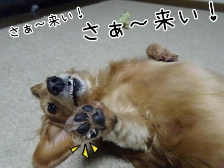kinako8435.jpg