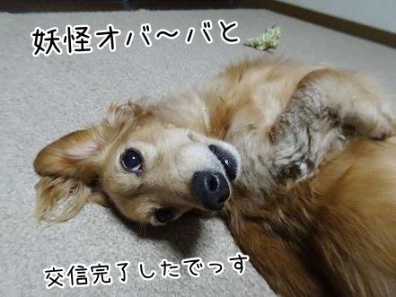 kinako8437.jpg