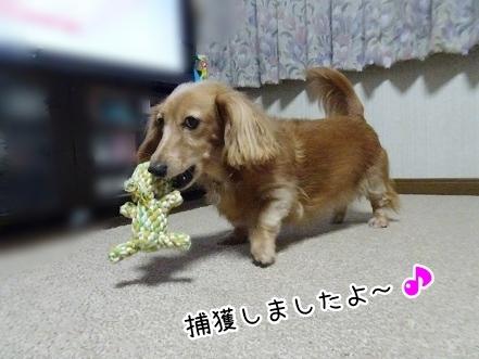 kinako8439.jpg