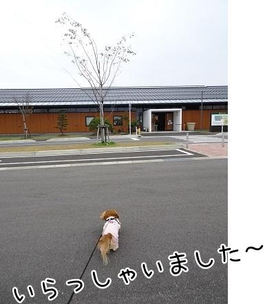 kinako8444.jpg