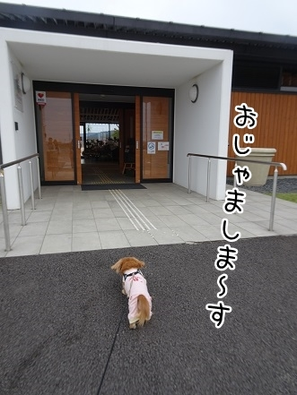 kinako8445.jpg