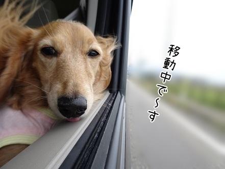 kinako8460.jpg