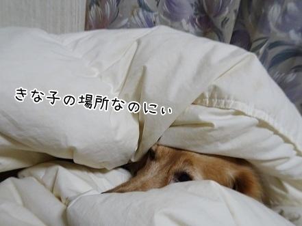 kinako8468.jpg