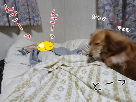 kinako8469.jpg