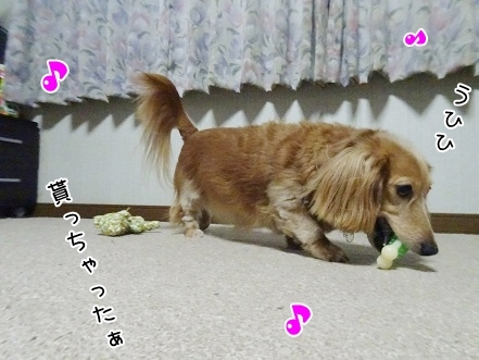 kinako8478.jpg