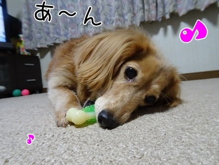 kinako8479.jpg
