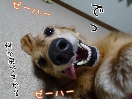 kinako8484.jpg