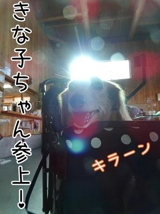 kinako8488.jpg