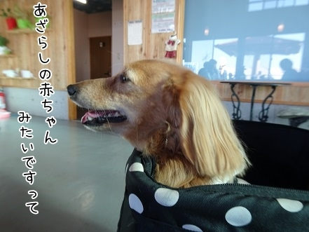kinako8492.jpg