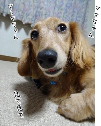 kinako8509.jpg