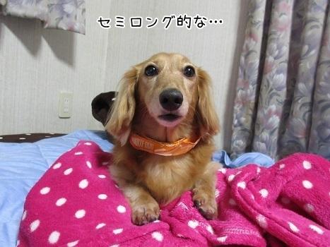 kinako8515.jpg