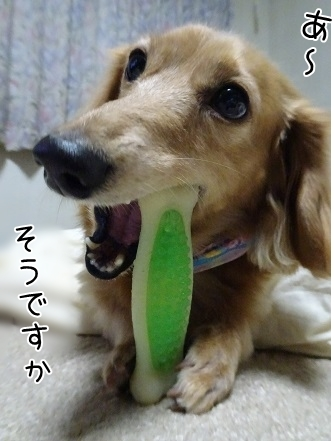 kinako8526.jpg