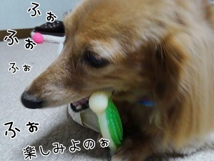 kinako8529.jpg